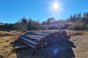 Træstammer og fuld sol i Vrads Sande
