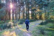 Solen skinner gennem træerne ved Vrads Sande
