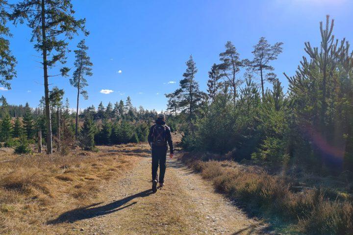 Vandring i Nedergård Skov og Groest Hede