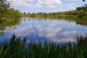 Lille sø ved Bryrupbanestien.