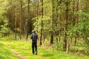 Vandring i skoven ved Sepstrup.