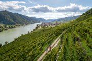 Cykling langs Donau-cykelstien gennem Wachau, Wiessenkirchen (c) Oesterreich Werbung / Martin Steinthaler