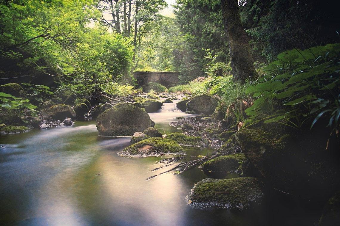 Vandreferie i Harzen