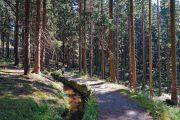 Vandring i Harzen; Oberharzen Wasserregal