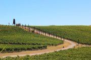 Cykling gennem Toscanas vinmarker
