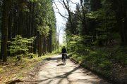 Cykling i Velling Skov ved Bryrup