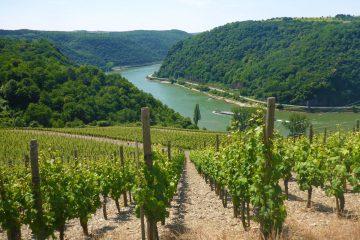 Vandring langs Rhinen fra Rüdesheim til Koblenz
