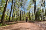 Vandring i Rude Skov