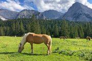 Heste i Gaistal-dalen